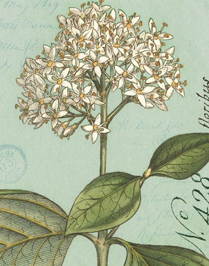 Botanique Bleu IV by Wild Apple Portfolio art print