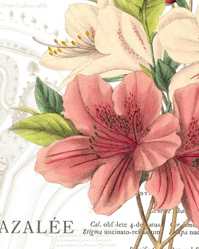 Azalee Jardin I by Wild Apple Portfolio art print