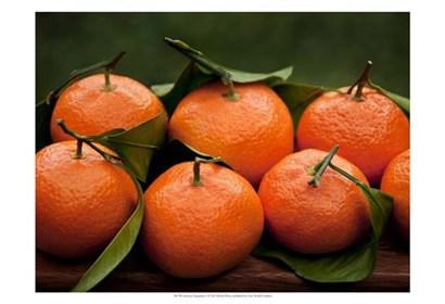 Satsuma Tangerines I by Rachel Perry art print