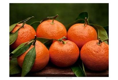 Satsuma Tangerines II by Rachel Perry art print