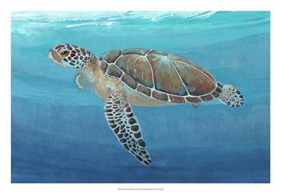 Ocean Sea Turtle II by Timothy O'Toole art print