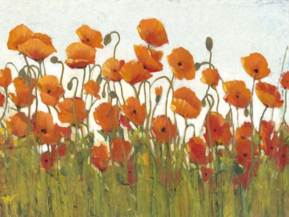 Rows of Poppies II by Timothy O'Toole art print