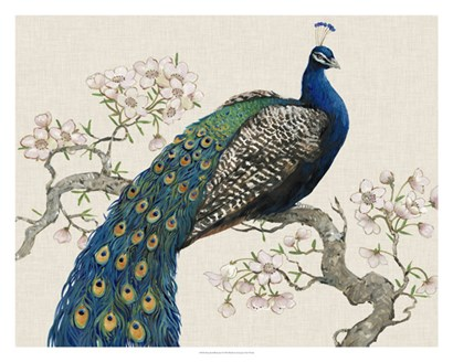 Peacock & Blossoms I by Timothy O'Toole art print