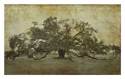 Sugarmill Oak, Louisiana by William Guion art print