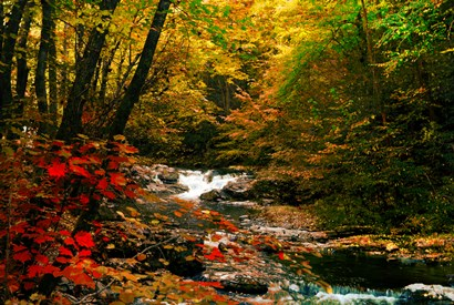 Mountain Stream by Jerome Andrews art print
