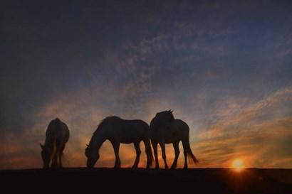 Camargue Sunrise by PHBurchett art print