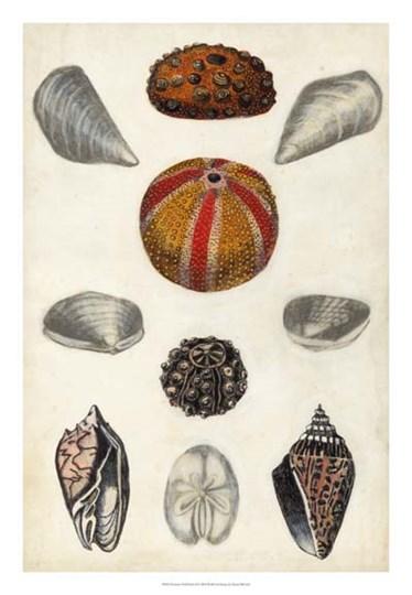 Seashore Field Notes II by Naomi McCavitt art print