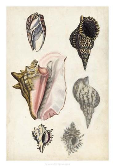 Seashore Field Notes III by Naomi McCavitt art print