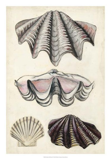 Seashore Field Notes IV by Naomi McCavitt art print
