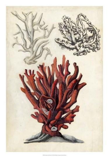 Seashore Field Notes VI by Naomi McCavitt art print