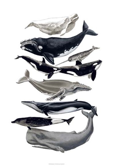 Whale Display I by Naomi McCavitt art print