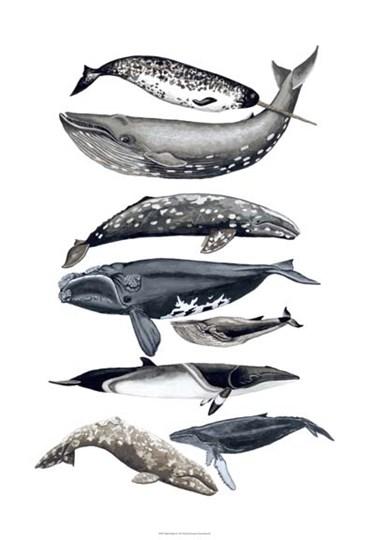 Whale Display II by Naomi McCavitt art print