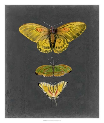 Butterflies on Slate I by Naomi McCavitt art print