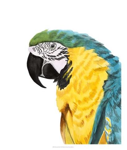 Watercolor Parrot by Naomi McCavitt art print