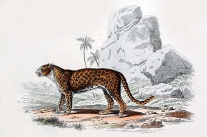 Leopard III by Georges-Louis Leclerc, Comte de Buffon art print