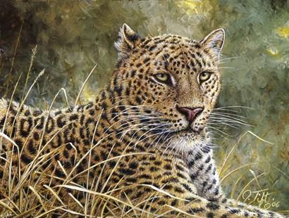 Leopard Portrait by Jeff Tift art print