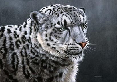 Snow Leopard by Dr. Jeremy Paul art print