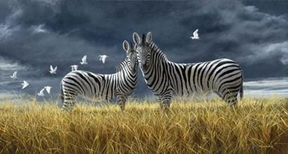 Coming Of Rain Zebra by Dr. Jeremy Paul art print