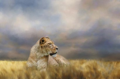 Lioness After The Storm by Jai Johnson art print