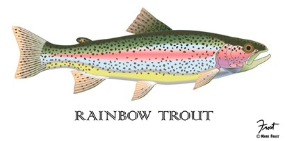 Rainbow Trout by Mark Frost art print