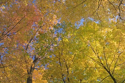 Mille Lacs Kathio State Park, Minnesota by Panoramic Images art print