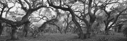 Lake Kissimmee State Park, Florida by Panoramic Images art print