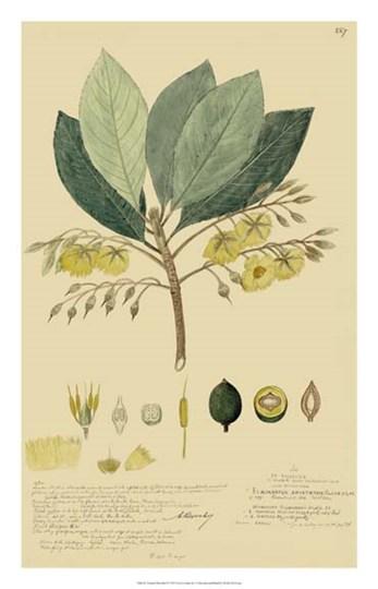 Tropical Descubes II by Alexandre Descubes art print