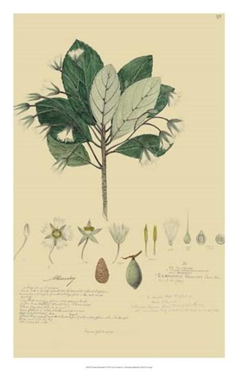 Tropical Descubes IV by Alexandre Descubes art print