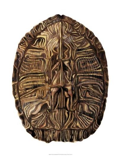Tortoise Shell Detail II by Naomi McCavitt art print