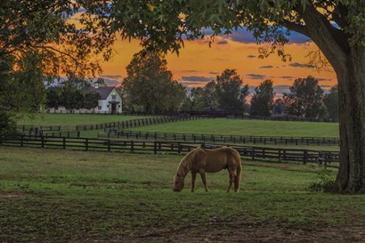 Horse Farm Sunset by Galloimages Online art print