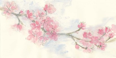 Cherry Blossom II by Chris Paschke art print