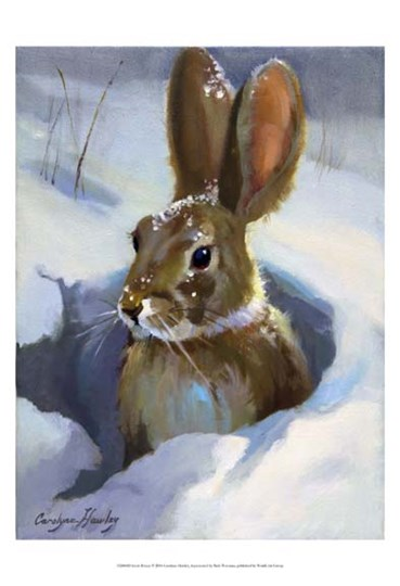 Snow Bunny by Carolyne Hawley art print