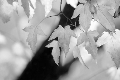 Leaves and Light by Nicholas Bell Photography art print