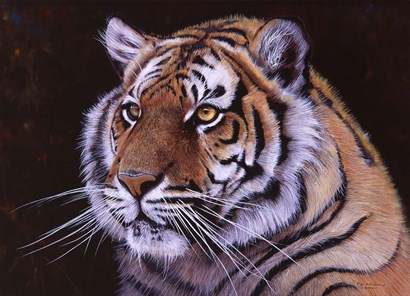 Bengal Tiger by Pip McGarry art print