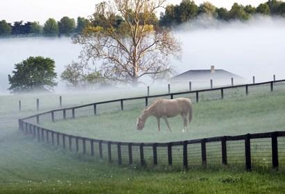 Horses in the Mist #3, Kentucky 08 by Monte Nagler art print