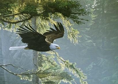 Forest Flight / Eagle by Ron Parker art print