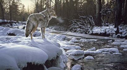 Winter Creek - Coyote by Ron Parker art print