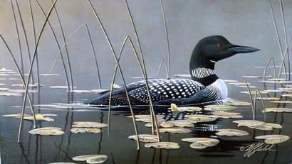 Loon In Reeds by Wilhelm J. Goebel art print