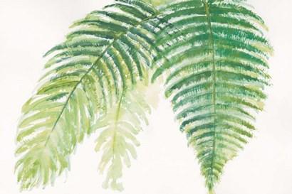 Ferns III Square by Chris Paschke art print