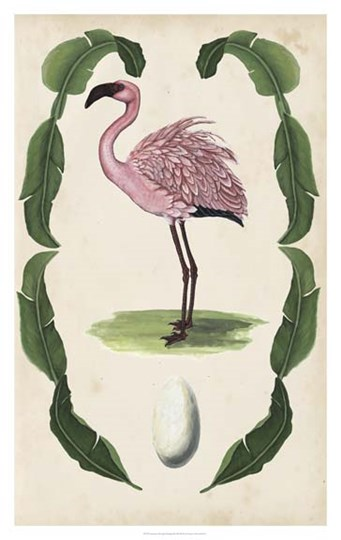 Antiquarian Menagerie - Flamingo II by Naomi McCavitt art print