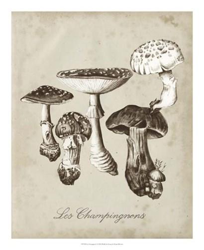 Les Champignons I by Naomi McCavitt art print
