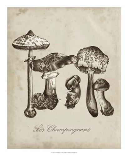 Les Champignons II by Naomi McCavitt art print