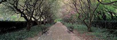 Through Conservatory Garden, Central Park, NYC by Richard Berenholtz art print