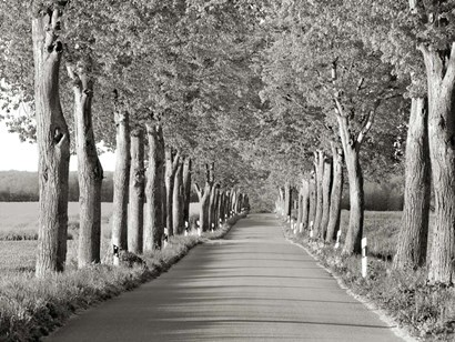 Lime Tree Alley, Mecklenburg Lake District, Germany 2 by Frank Krahmer art print