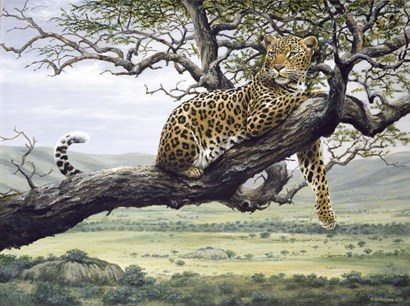 Leopard by Harro Maass art print