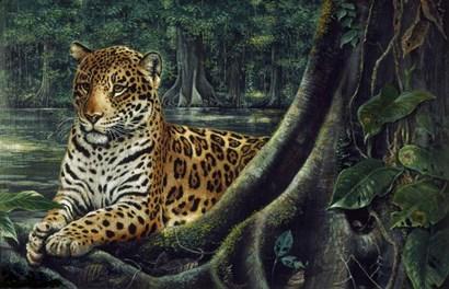 Jaguar By The River by Harro Maass art print