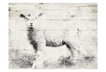 Vintage Lamb by Jace Grey art print