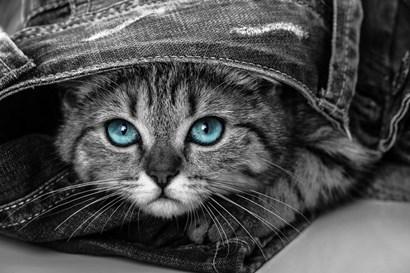 Pop of Color Kitten by Color Me Happy art print