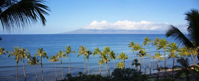 Palm Trees on the Beach, Maui, Hawaii by Panoramic Images art print