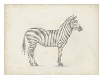 Zebra Sketch by Ethan Harper art print